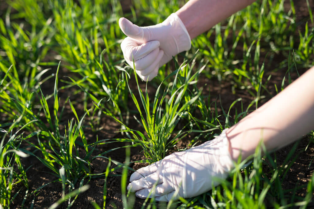 a scientist check the crop and soil quality for the organic level | Agrrro