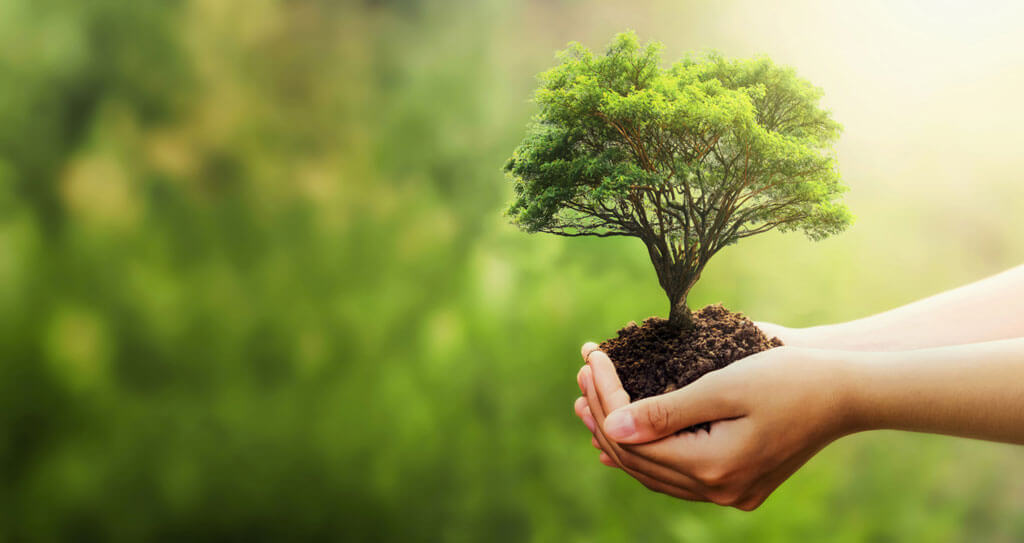 a small tree in hands of a person representing the eco friendly nature of organic farming | Agrrro