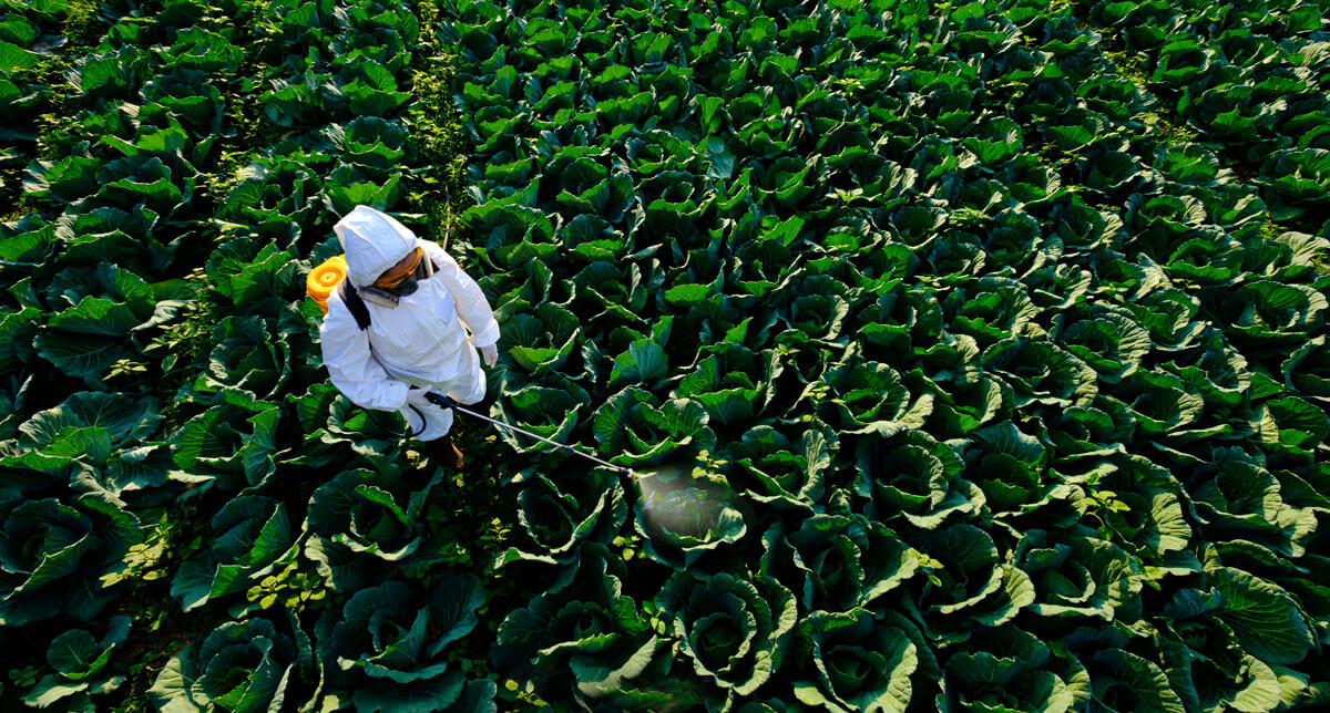 A person in the fields spraying fertilizers and pesticides on the crops doing inorganic farming | Agrrro
