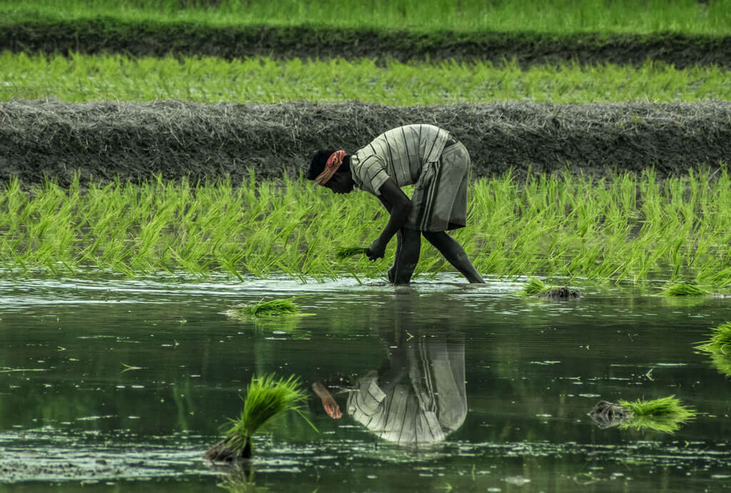 image showing the farmers farming the organic crops | Agrrro