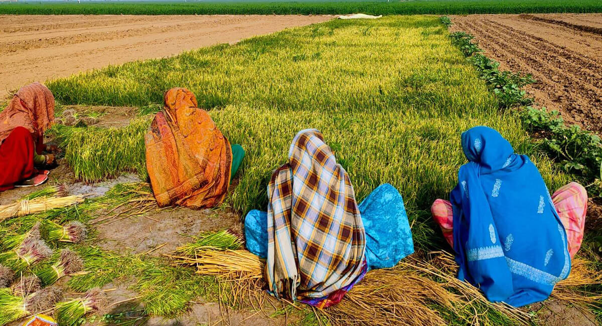 multiple women working in the fields to grow organic food manually | Agrrro